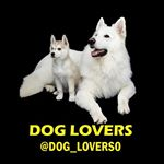 Dog Lovers dog_lovers0